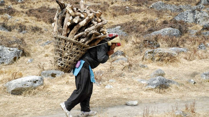 A woman carries firewood using a tumpline.