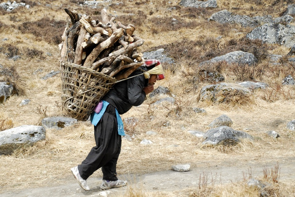 A woman carries firewood using a tumpline.