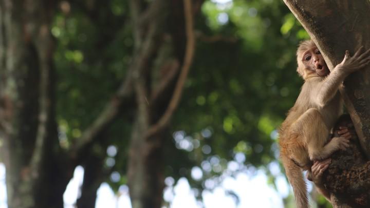 A monkey grips a tree.