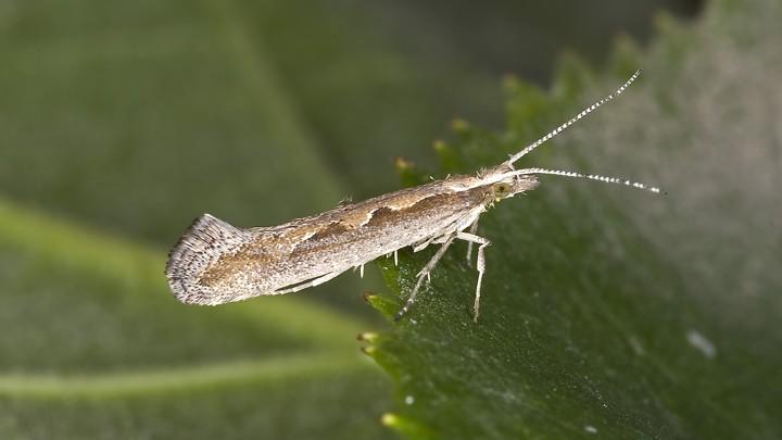 Brown moth on green leaf