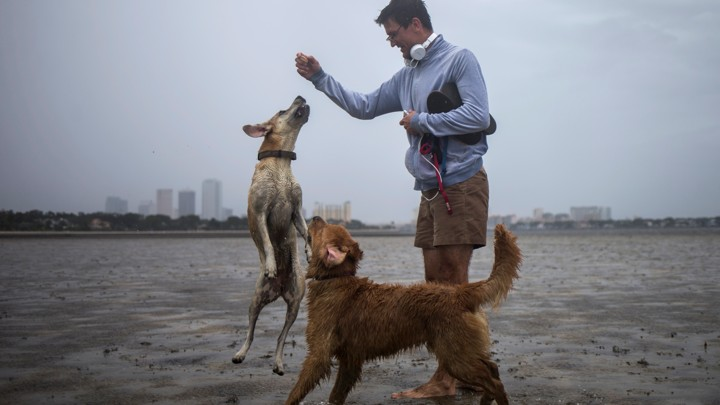 A man plays with two dogs in the drained bed of Hillsborough Bay with the Tampa skyline in the background.
