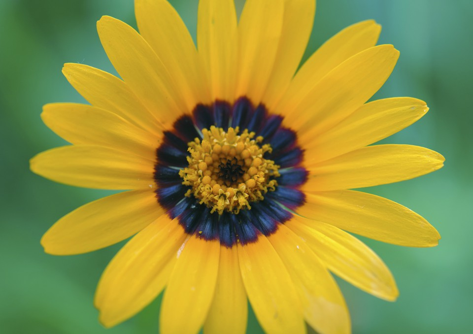 A Flower With Blue Halo