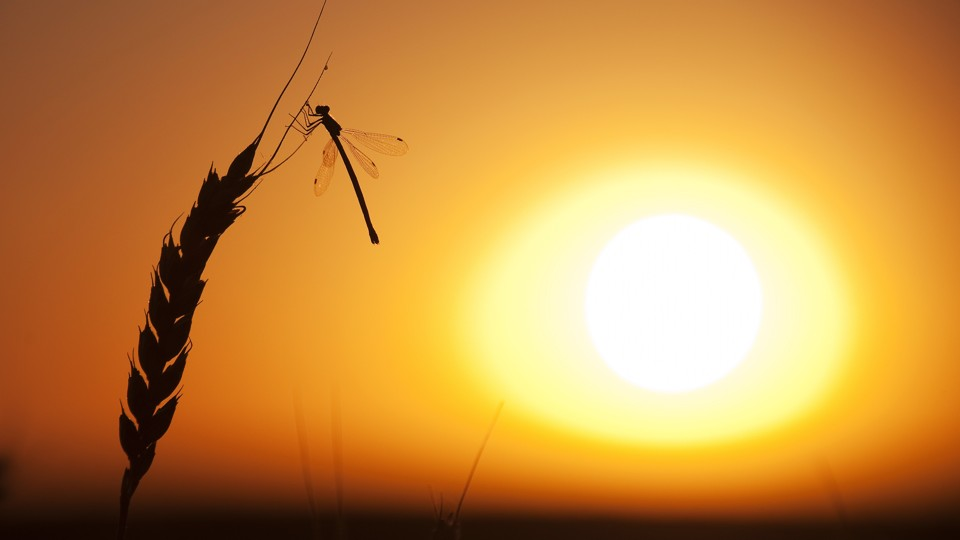 A dragonfly in the sunset