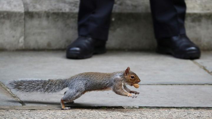 A squirrel runs past a person on a sidewalk.