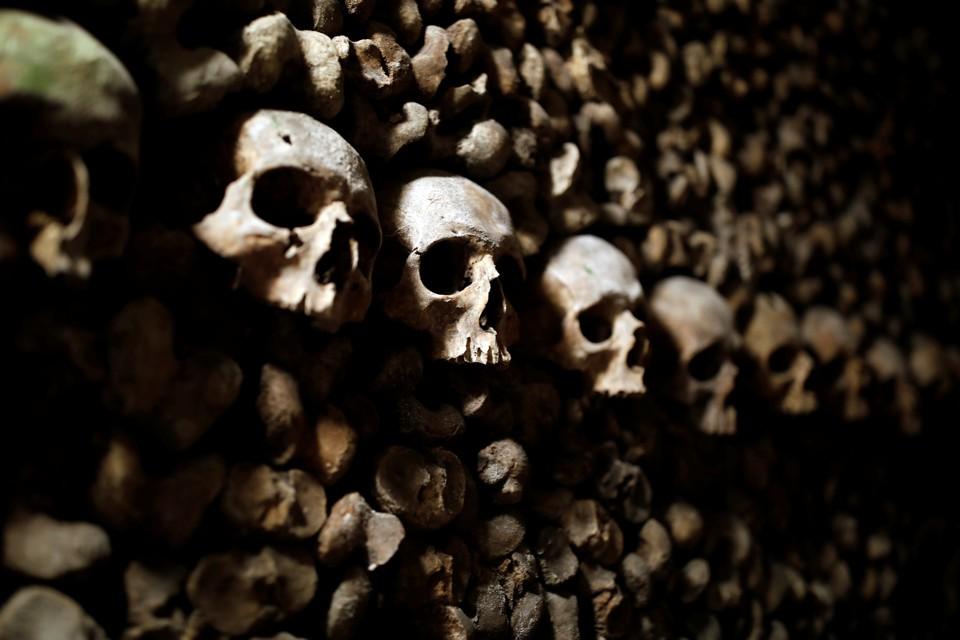 A stack of bones and skulls
