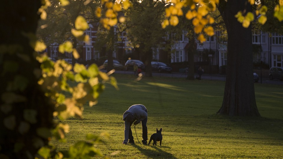 A person stoops to pick up their dog's waste in a park