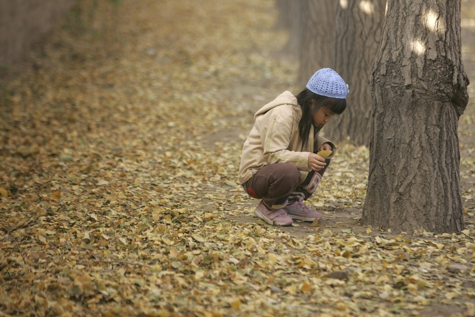 A girl plays in the aftermath of a giant ginkgo dump