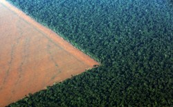 Deforested land in Brazil