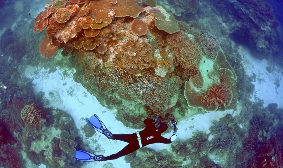 A scuba diver or snorkeler investigates a reef