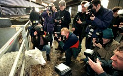 Dolly surrounded by a flock of photographers