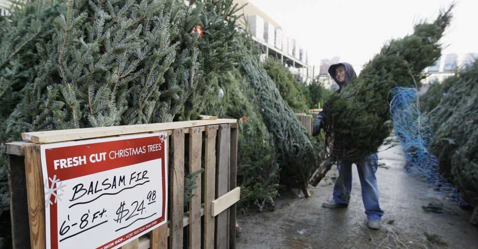 Shortage Of Christmas Trees 2019 The Christmas Tree Shortage Could Last for Years   The Atlantic