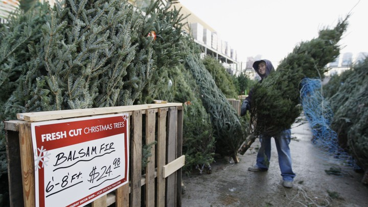 The Christmas Tree Shortage Could Last For Years The Atlantic