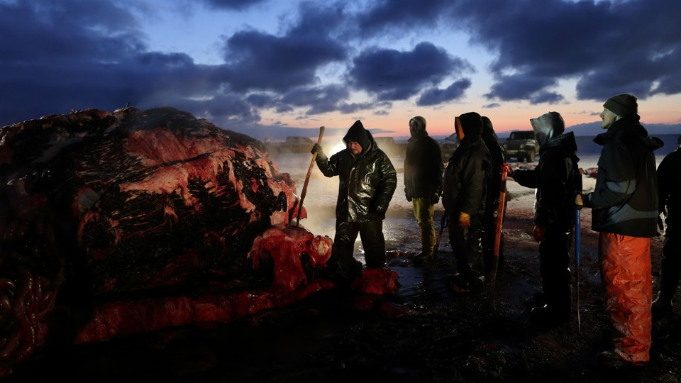 A group of people butcher a bowhead whale on a beach.