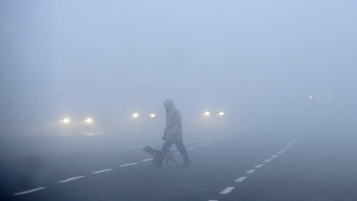 A person and a dog walk across a road in foggy weather.