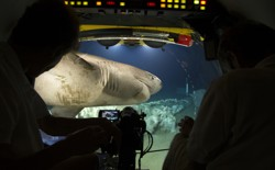 A sixgill shark glides past a submersible.
