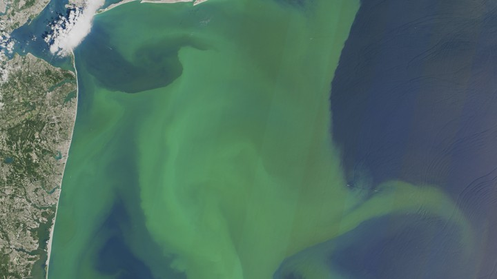 Algae blooms off the coast of New York and New Jersey