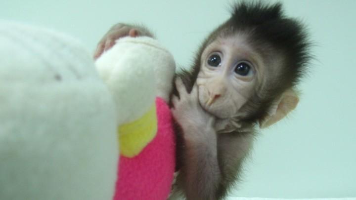 A baby monkey holding a stuffed animal