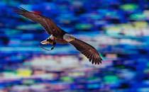 A bald eagle soars into a stadium