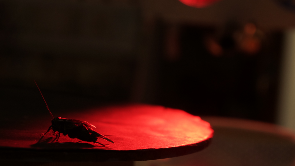 A silhouette of a cricket under a red light
