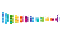 A colorful illustration of 23 pairs of chromosomes