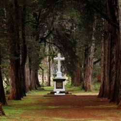 A grove of trees and one grave, marked by a large, white cross