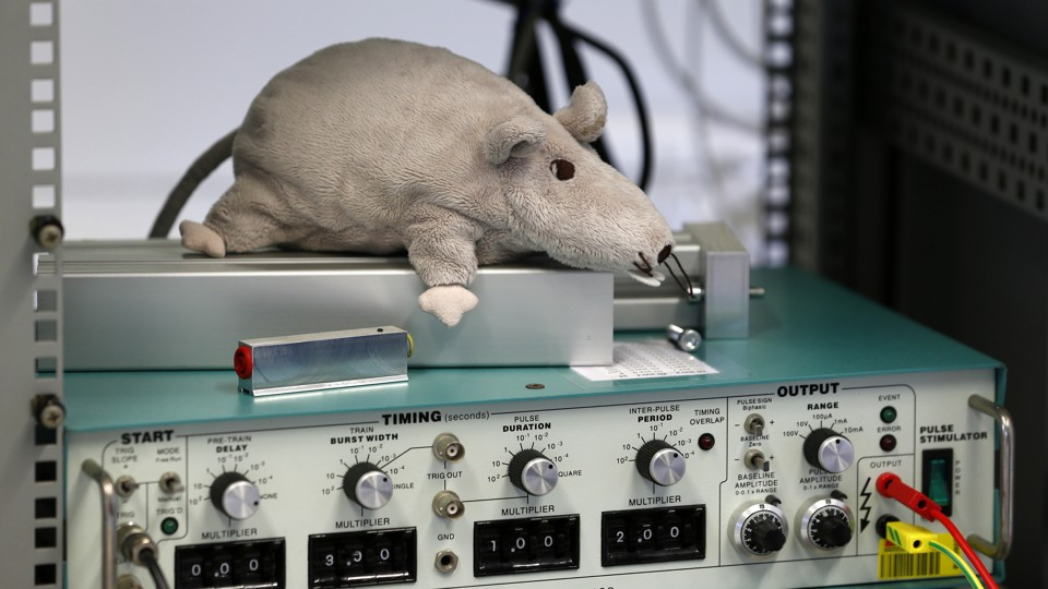 A stuffed toy rat laying on scientific equipment