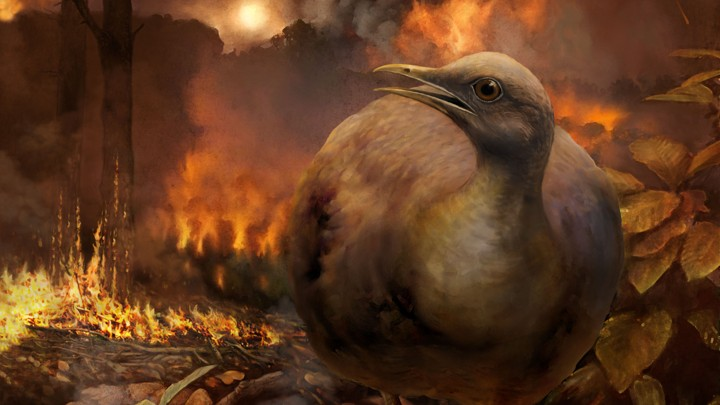 A bird walks through a burning forest.