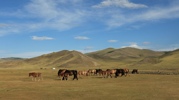 Horses in a steppe