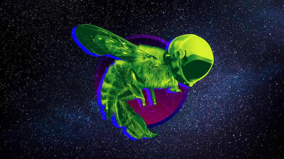 An illustration of a helmet-wearing bee hovering in space