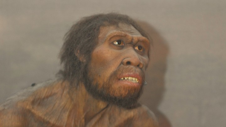 An artist's impression of <em>Homo Ergaster</em>