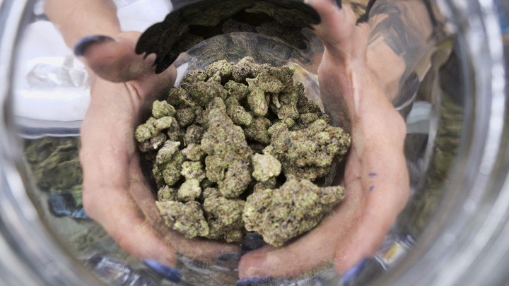 A person's hands hold a pile of dried marijuana buds/