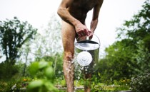 A nude man waters a garden