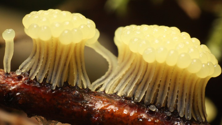 A collection of slime-mold spores