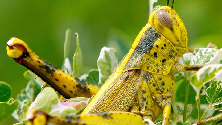 global warming means insects will eat more crops the atlantic