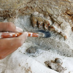 A hand brushes off a specimen at an excavation site