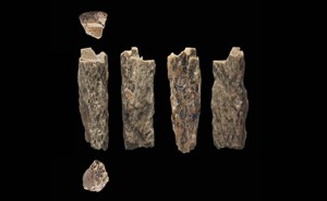 A bone fragment, photographed at six different angles