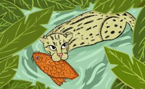 An illustration of a fishing cat holding a koi in its mouth