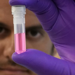 A person wearing a purple glove holds a vial of pink-colored liquid.