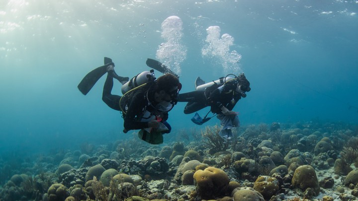 Two scuba divers swim along a coral reef.