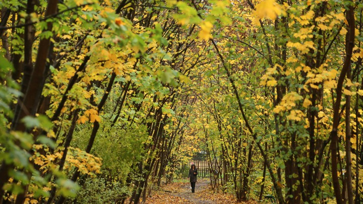 A woman walks on a densely wooded path.