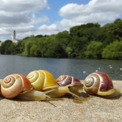 Snails lined up on a bridge