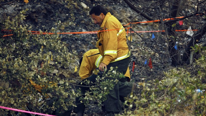 A wildfire investigator stands in a thicket