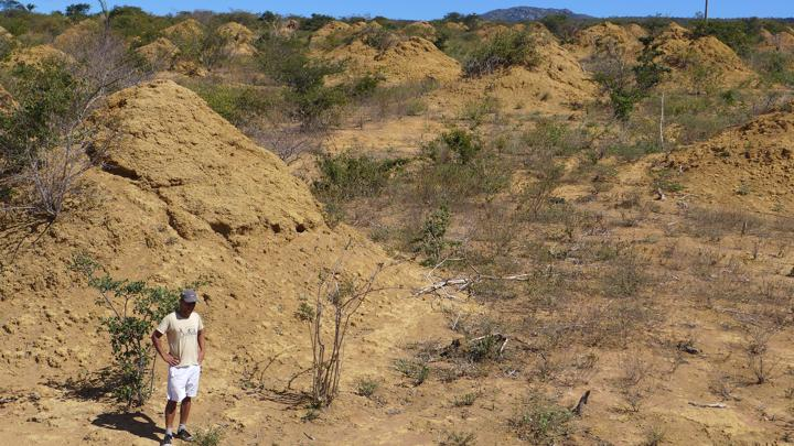 Murundus, or giant termite mounds, in Brazil
