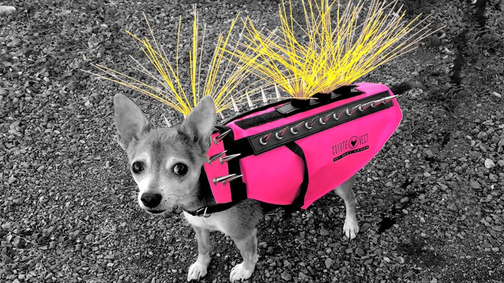 Meet The Dog With The Viral Spiky Coyote Vest The Atlantic