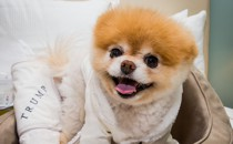 The Unsettling Truth About The Worlds Most Adorable Dog