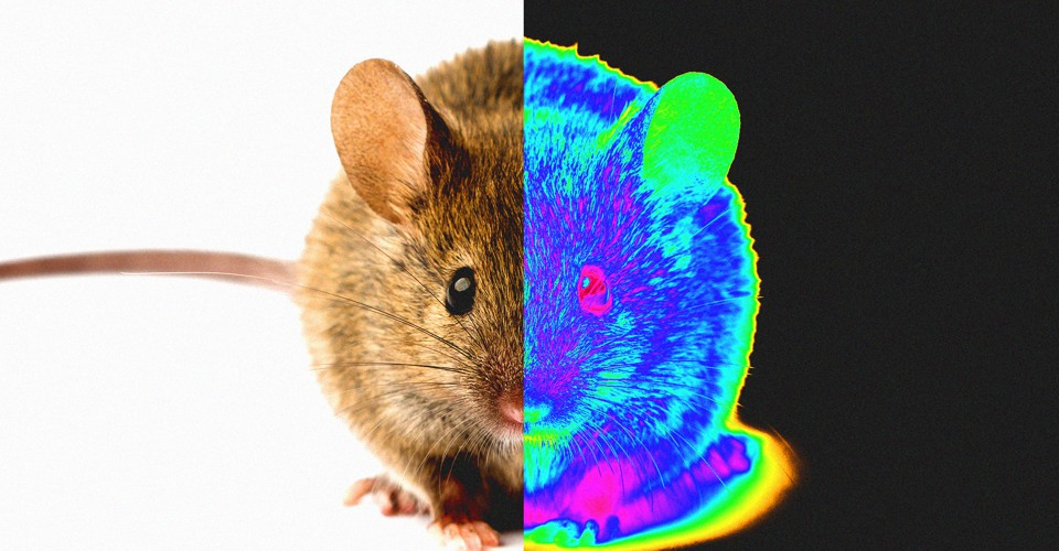 Nanotech Injections Give Mice Infrared Vision - The Atlantic