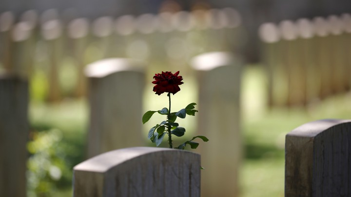 A red rose grows next to a headstone in a cemetery.