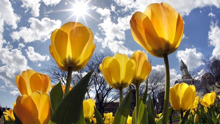 Image result for spring