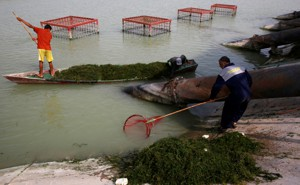 Workers in Basra, Iraq, clean polluted water.