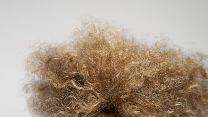A close-up of frizzy hair